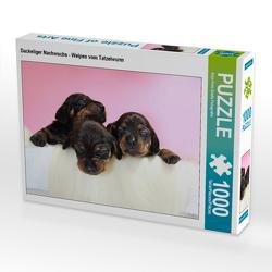 CALVENDO Puzzle Dackeliger Nachwuchs – Welpen vom Tatzelwurm 1000 Teile Lege-Größe 64 x 48 cm Foto-Puzzle Bild von Anja Foto Grafia Fotografie