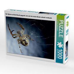 CALVENDO Puzzle Der Spinne auf den Bauch geguckt, hat sich die lecker Beute schnell verdruckt. 1000 Teile Lege-Größe 64 x 48 cm Foto-Puzzle Bild von Carl-Peter Herbolzheimer von Herbolzheimer,  Carl-Peter
