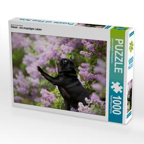 CALVENDO Puzzle Diesel – ein mopsiges Leben 1000 Teile Lege-Größe 64 x 48 cm Foto-Puzzle Bild von Sabrina Wobith Photography – FotosVonMaja