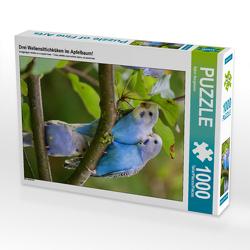 CALVENDO Puzzle Drei Wellensittichküken im Apfelbaum! 1000 Teile Lege-Größe 48 x 64 cm Foto-Puzzle Bild von Björn Bergmann