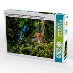 CALVENDO Puzzle Ein seltener Nasenaffe beim Verzehr von Blättern in einer Baumkrone 2000 Teile Lege-Größe 90 x 67 cm Foto-Puzzle Bild von Arne Wünsche