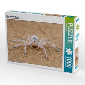 CALVENDO Puzzle Eine Wüstenspinne 1000 Teile Lege-Größe 64 x 48 cm Foto-Puzzle Bild von Christian Alpert