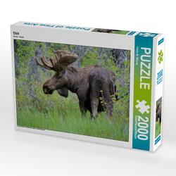 CALVENDO Puzzle Elch 2000 Teile Lege-Größe 90 x 67 cm Foto-Puzzle Bild von Dieter-M. Wilczek