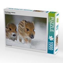 CALVENDO Puzzle Frischlinge im Schnee 1000 Teile Lege-Größe 64 x 48 cm Foto-Puzzle Bild von Wilfried Martin