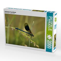 CALVENDO Puzzle Gebänderte Prachtlibelle 2000 Teile Lege-Größe 90 x 67 cm Foto-Puzzle Bild von Sabine Löwer
