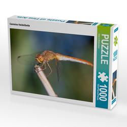 CALVENDO Puzzle Gemeine Heidelibelle 1000 Teile Lege-Größe 64 x 48 cm Foto-Puzzle Bild von Dany´s Blickwinkel