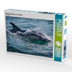CALVENDO Puzzle Gemeiner Delfin vor St. Davids 2000 Teile Lege-Größe 90 x 67 cm Foto-Puzzle Bild von Katja Jentschura