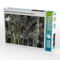 CALVENDO Puzzle Gesponnen hat die Spinne fein und hofft auf Beute die fliegt rein. 1000 Teile Lege-Größe 64 x 48 cm Foto-Puzzle Bild von Carl-Peter Herbolzheimer von Herbolzheimer,  Carl-Peter