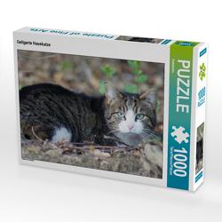 CALVENDO Puzzle Getigerte Hauskatze 1000 Teile Lege-Größe 64 x 48 cm Foto-Puzzle Bild von Kattobello