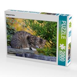 CALVENDO Puzzle Getigerte Katze 2000 Teile Lege-Größe 90 x 67 cm Foto-Puzzle Bild von Sabine Löwer