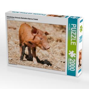 CALVENDO Puzzle Glückliches Schwein Berkshire-Iberico Ferkel 2000 Teile Lege-Größe 90 x 67 cm Foto-Puzzle Bild von Meike Bölts