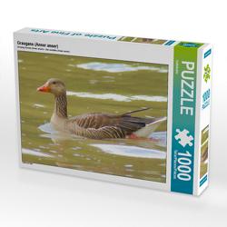 CALVENDO Puzzle Graugans (Anser anser) 1000 Teile Lege-Größe 64 x 48 cm Foto-Puzzle Bild von kattobello