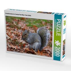 CALVENDO Puzzle Grauhörnchen im Central Park New York (USA) 2000 Teile Lege-Größe 90 x 67 cm Foto-Puzzle Bild von Jana Thiem-Eberitsch