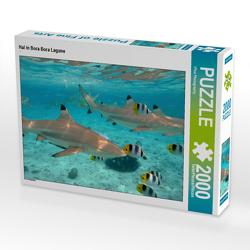 CALVENDO Puzzle Hai in Bora Bora Lagune 2000 Teile Lege-Größe 90 x 67 cm Foto-Puzzle Bild von iPics Photography