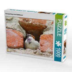 CALVENDO Puzzle Haussperling in der Stadtmauer 1000 Teile Lege-Größe 64 x 48 cm Foto-Puzzle Bild von kattobello