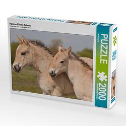 CALVENDO Puzzle Henson Pferde Fohlen 2000 Teile Lege-Größe 90 x 67 cm Foto-Puzzle Bild von Meike Bölts