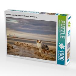 CALVENDO Puzzle Hübscher Australian Shepherd Rüde vor Westerhever 1000 Teile Lege-Größe 64 x 48 cm Foto-Puzzle Bild von Annett Mirsberger tierpfoto