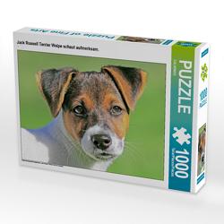CALVENDO Puzzle Jack Russell Terrier Welpe schaut aufmerksam. 1000 Teile Lege-Größe 64 x 48 cm Foto-Puzzle Bild von CALVENDO