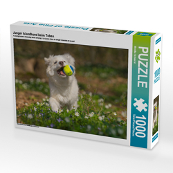 CALVENDO Puzzle Junger Islandhund beim Toben 1000 Teile Lege-Größe 64 x 48 cm Foto-Puzzle Bild von Monika Scheurer