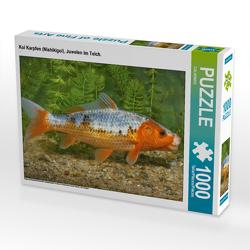 CALVENDO Puzzle Koi Karpfen (Nishikigoi), Juwelen im Teich. 1000 Teile Lege-Größe 64 x 48 cm Foto-Puzzle Bild von CALVENDO