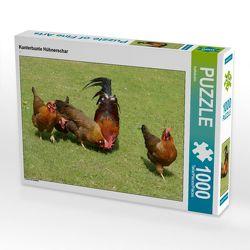 CALVENDO Puzzle Kunterbunte Hühnerschar 1000 Teile Lege-Größe 64 x 48 cm Foto-Puzzle Bild von kattobello