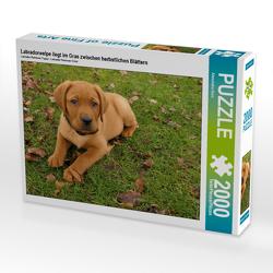 CALVENDO Puzzle Labradorwelpe liegt im Gras zwischen herbstlichen Blättern 2000 Teile Lege-Größe 90 x 67 cm Foto-Puzzle Bild von Alexandra Kurz