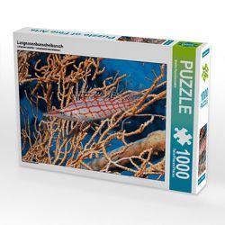 CALVENDO Puzzle Langnasenbueschelbarsch 1000 Teile Lege-Größe 64 x 48 cm Foto-Puzzle Bild von Martin Rauchenwald