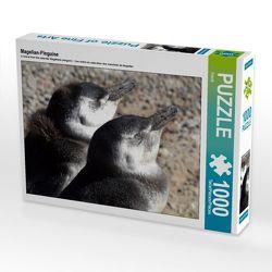 CALVENDO Puzzle Magellan-Pinguine 1000 Teile Lege-Größe 64 x 48 cm Foto-Puzzle Bild von Flori0