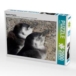 CALVENDO Puzzle Magellan-Pinguine 2000 Teile Lege-Größe 90 x 67 cm Foto-Puzzle Bild von Flori0