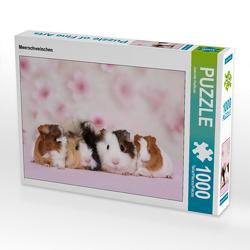 CALVENDO Puzzle Meerschweinchen 1000 Teile Lege-Größe 64 x 48 cm Foto-Puzzle Bild von Jeanette Hutfluss