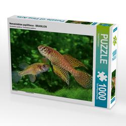 CALVENDO Puzzle Nematolebias papilliferus – BRASILIEN 1000 Teile Lege-Größe 64 x 48 cm Foto-Puzzle Bild von Rudolf Pohlmann