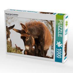 CALVENDO Puzzle Neugieriges Eselfohlen 1000 Teile Lege-Größe 64 x 48 cm Foto-Puzzle Bild von Meike Bölts