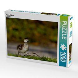 CALVENDO Puzzle Nilgansküken 1000 Teile Lege-Größe 64 x 48 cm Foto-Puzzle Bild von Ursula Di Chito von Di Chito,  Ursula