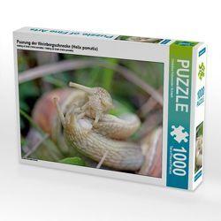 CALVENDO Puzzle Paarung der Weinbergschnecke (Helix pomatia) 1000 Teile Lege-Größe 64 x 48 cm Foto-Puzzle Bild von Christine Schmutzler-Schaub von Schmutzler-Schaub,  Christine