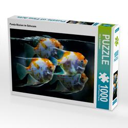 CALVENDO Puzzle Panda-Skalare im Schwarm 1000 Teile Lege-Größe 64 x 48 cm Foto-Puzzle Bild von Heinz Schmidbauer