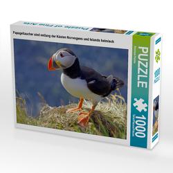 CALVENDO Puzzle Papageitaucher sind entlang der Küsten Norwegens und Islands heimisch 1000 Teile Lege-Größe 64 x 48 cm Foto-Puzzle Bild von Reinhard Pantke