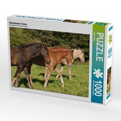CALVENDO Puzzle Rheinländer Fohlen 1000 Teile Lege-Größe 64 x 48 cm Foto-Puzzle Bild von Meike Bölts