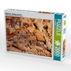 CALVENDO Puzzle Rötelmaus – Myodes glareolus 2000 Teile Lege-Größe 90 x 67 cm Foto-Puzzle Bild von Janita Webeler