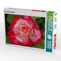 CALVENDO Puzzle Rot weiße Rosenblüte 1000 Teile Lege-Größe 64 x 48 cm Foto-Puzzle Bild von kattobello