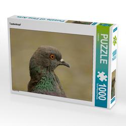 CALVENDO Puzzle Taubenkopf 1000 Teile Lege-Größe 64 x 48 cm Foto-Puzzle Bild von kattobello