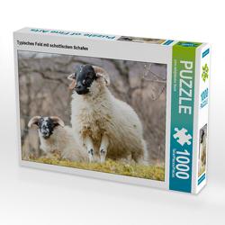 CALVENDO Puzzle Typisches Feld mit schottischen Schafen 1000 Teile Lege-Größe 64 x 48 cm Foto-Puzzle Bild von pixs:sell@Adobe Stock