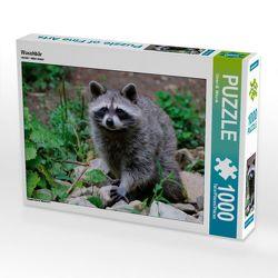 CALVENDO Puzzle Waschbär 1000 Teile Lege-Größe 64 x 48 cm Foto-Puzzle Bild von Dieter-M. Wilczek