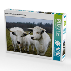 CALVENDO Puzzle White Park Cattle auf der Winterweide 1000 Teile Lege-Größe 64 x 48 cm Foto-Puzzle Bild von Stefanie Goldscheider
