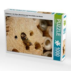 CALVENDO Puzzle Wildbienen in der Natur. Mauerbiene beim Verschließen des Nestes 1000 Teile Lege-Größe 64 x 48 cm Foto-Puzzle Bild von Anja Frost