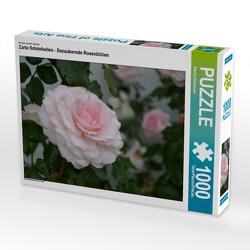 CALVENDO Puzzle Zarte Schönheiten – Bezaubernde Rosenblüten 1000 Teile Lege-Größe 64 x 48 cm Foto-Puzzle Bild von Bianca Schumann