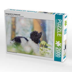 CALVENDO Puzzle Zwergpudel im Zauberwald 2000 Teile Lege-Größe 90 x 67 cm Foto-Puzzle Bild von Sabine Böke-Bergau