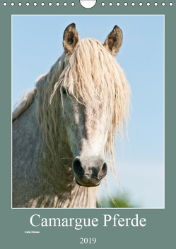 Camargue Pferde – weiße Mähnen (Wandkalender 2019 DIN A4 hoch) von Bölts,  Meike