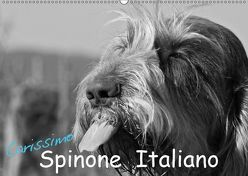 Carissimo Spinone Italiano (Wandkalender 2019 DIN A2 quer) von Drafz,  Silvia