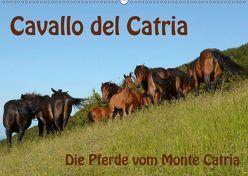 Cavallo del Catria – Die Pferde vom Monte Catria (Wandkalender 2019 DIN A2 quer) von van Wyk - www.germanpix.net,  Anke