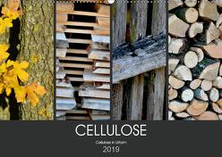 Cellulose, Cellulose in Urform (Wandkalender 2019 DIN A2 quer) von Fotokullt